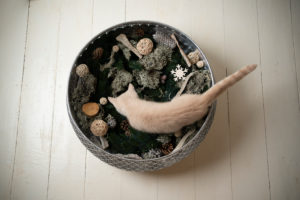 top view of a cream colored british shorthair kitten inside of bowl with winter decoaration elements