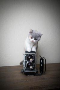 cute british shorthair kitten climbing up vintage analog film camera