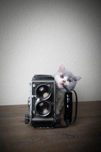 cute british shorthair kitten chewing on old vintage film camera