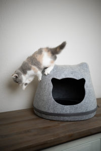 calico white british shorthair kitten jumping down from felt pet cave shaped like a cat's head