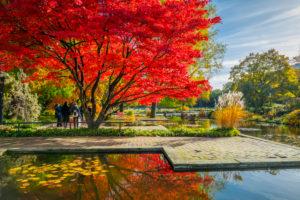 Germany, Hamburg, Park, park, Planten un Blomen, autumn