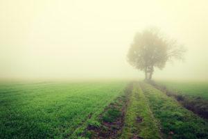 Misty autumnal landscape in Kirchwerder, Vier- und Marschlande, Hamburg, Germany, Europe