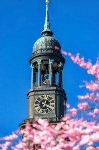 Frühlingsblüte und Michel in Hamburg, Deutschland, Europa