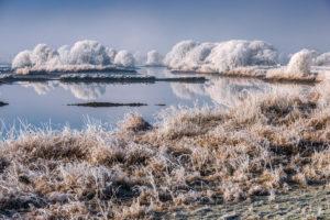 Wintry Elbe shore in the nature reserve Zollenspieker in Kirchwerder, Hamburg, Germany, Europe