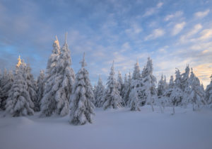 Germany, Lower Saxony, Harz National Park, snowy landscape in the Harz National Park