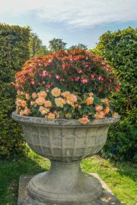 Deutschland, Baden-Württemberg, Ludwigsburg,  Blumenschmuck im Schlossgarten Ludwigsburg