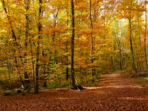Germany, Bavaria, trail near Eching, leaves coloring, autumn
