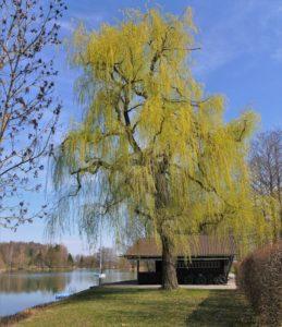 Germany, Bavaria, Germeringer See, pasture, hut, reflection, spring
