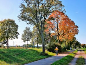 Germany, Bavaria, Germering, bike path at the Bodenseestraße, cyclists, autumn