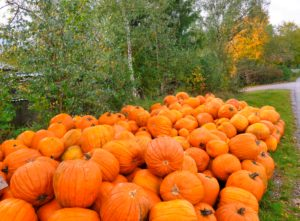 Germany, Bavaria, Germering, Pumpkin Sale, Autumn