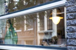 Niederlande, Holland, Amsterdam, Katze in Fenster