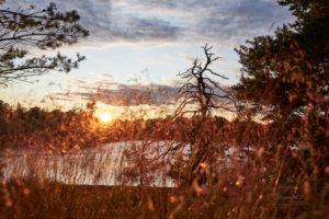 Sweden, Östergötaland, St. Anna, archipelago, Baltic Sea, evening mood