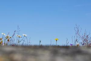 Schweden, Östergötaland, St. Anna, Schärengarten, Blumen auf Felsen