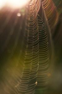 Spinnennetz, Gegenlicht, Detail