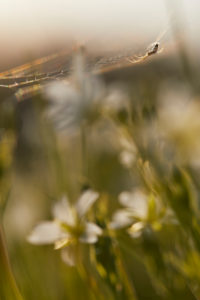 Spider, spider web, meadow