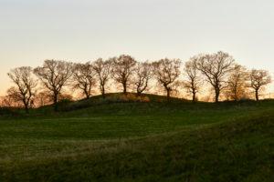 Germany, Mecklenburg-West Pomerania, landscape, evening, oak trees, row of trees
