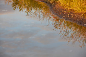 Germany, Mecklenburg-Western Pomerania, landscape, summer, evening
