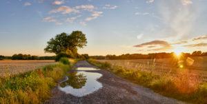 Deutschland, Mecklenburg-Vorpommern, Landschaft, Sommer, Abend