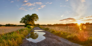 Germany, Mecklenburg-Western Pomerania, landscape, summer, evening