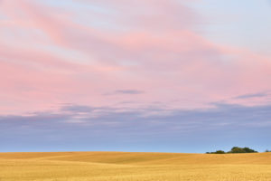 Germany, Mecklenburg-Western Pomerania, grain field, evening sky