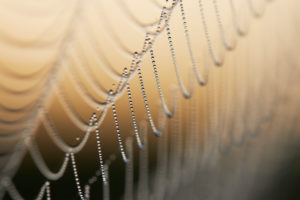 Spider web, morning dew, detail