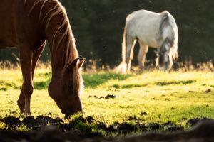 Pferdekoppel am Karersee