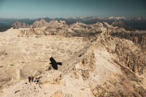 Plateau des Sellastocks vom Gipfel des Piz Boe aus gesehen, Alpendohle im Flug