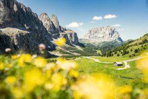 Gardena pass, Sassolungo and Sella group