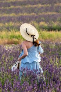 Lavendelfeld, Valensole,  Département Alpes-de-Haute-Provence, Region Provence-Alpes-Côte d'Azur, Frankreich