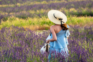 Lavender field, Valensole, Alpes-de-Haute-Provence, Provence-Alpes-Côte d'Azur Region, France
