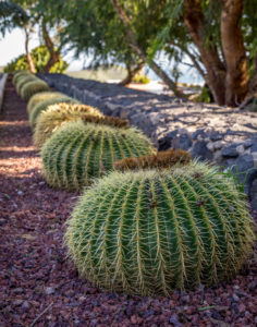 Spain, Canary Islands, Tenerife, gardens, cacti