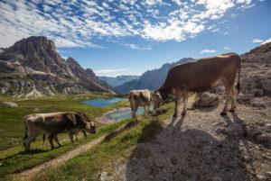 Italien, Südtirol, Dolomiten, Drei Zinnen