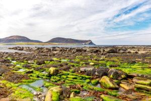 A rocky beach near Stromness
