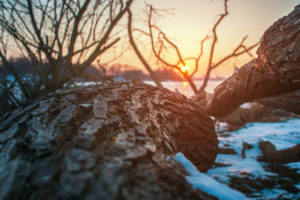 Sunset view of a fallen tree on the beach of the frozen river Elbe in Geesthacht near Hamburg