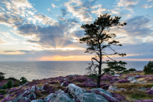 Europe, Denmark, Bornholm. Sundown over the Baltic Sea, in frontof the moor-covered steep coast south of Hammershus.