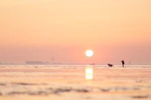 Europe, Germany, Lower Saxony, Otterndorf. In the soft light of the setting sun, a woman walks through the mudflats with her dog.