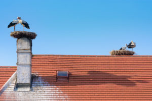 Rust, nest of white stork (Ciconia ciconia), juvenile storks waiting at nest, Town Hall roof in Neusiedler See (Lake Neusiedl), Burgenland, Austria
