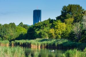 Wien / Vienna, oxbow lake Mühlwasser, DC Tower 1, mute swans in 22. Donaustadt, Vienna, Austria