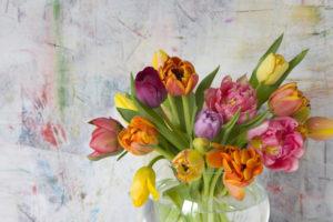 Coloured tulip bouquet in glass vase