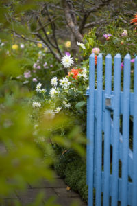 Blue wooden door in the allotment garden