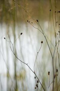 Grasses against the light