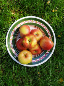 Plate of apples in the meadow