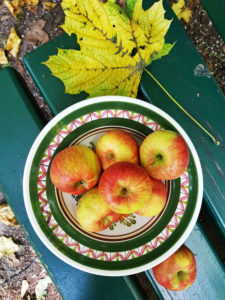 Plate of apples on bench