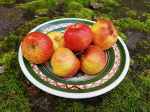 Plate of apples on moss