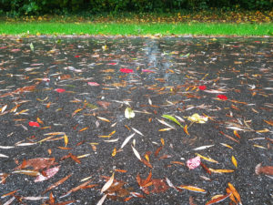 Rainy street with colorful autumn leaves