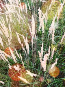 Meadow with autumnal grasses