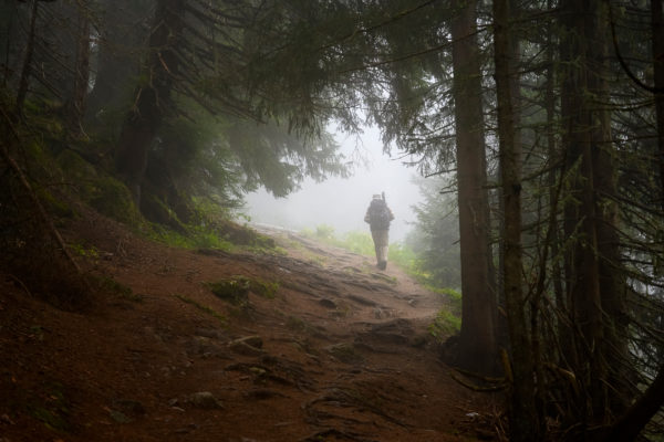 Austria, Montafon, hikers in the mountain forest at Partenen.