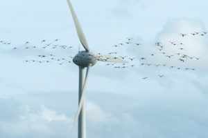 Germany, Lower Saxony, East Friesland, Krummhörn, barnacle goose (Branta leucopsis), big group in front of a wind power station,