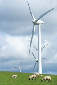 Germany, Lower Saxony, Krummhörn, wind power station, natural coastal defence, sheep on the sea dyke close Emden,