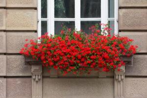 Speyer, das Stadthaus in der Maximilianstraße, Blumenkasten mit Geranien